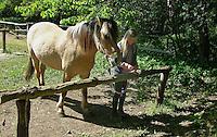 Mädchen beim Reitunterricht auf Ponyhof, Mädchen bindet Reitpony am Führstrick zum Putzen fest, Reiten, Reiterhof, Gestüt