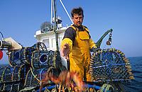 """Europe/France/Bretagne/29/Finistère/Le Conquet: pêche aux crustacés sur le """"Louarn Ar Mor"""" avec Alain Le Bras [AUTORISATION N°265]"""