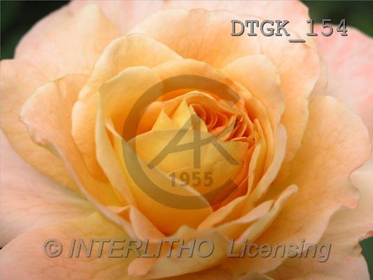 Gisela, FLOWERS, photos(DTGK154,#F#) Blumen, flores, retrato
