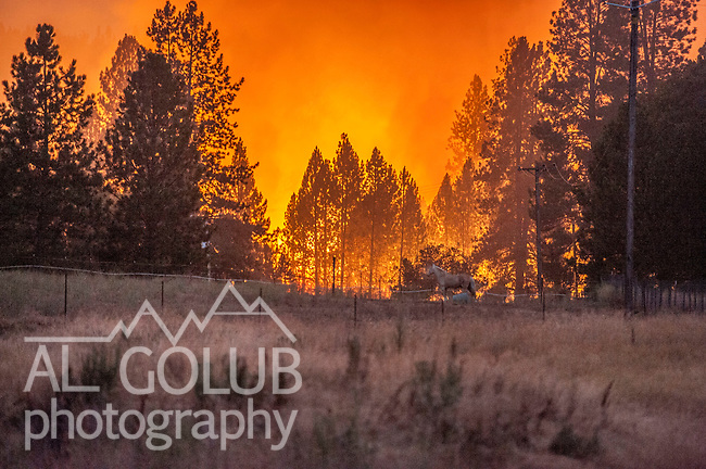 July 29, 2015--Big Creek fire- Just before 9:00 Pm Big Creek Fire continued to burn near Short line Rd and Hells Hollow Rd. Big Creek Fire was a 204 acre fire on Big Creek Shaft road near Groveland.  <br /> Photo by Al Golub/Golub Photography
