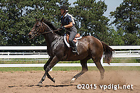 Timeless Farm Horse Show - July 12, 2015