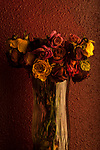 Multicolored roses wilting in glass vase with warm sunset light