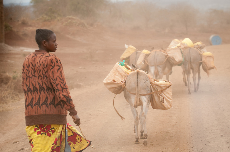 Climate change and deforestation are leading to increased drought in Africa. Kenyan women, who shoulder the responsibility for domestic chores, are having to travel many miles each day in search of scarce water.  Hard working donkeys are used to transport the scarce water.