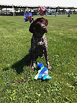Breed of Animal:	German Shorthaired Pointer<br />