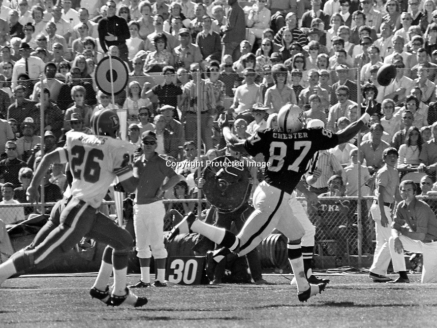 Oakland Raiders tight end Ray Chester grabs pass against the Denver Bronco's..(1971 photo/Ron Riesterer)