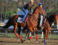 Commander, trained by Troy Taylor, trains for the Breeders' Cup Marathon at Santa Anita Park in Arcadia, California on October 30, 2013.