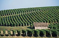 Europe/France/Aquitaine/33/Gironde/Saint-Seurin-de-Cadourne: Le Château Coufran (AOC Haut-Médoc) - Le vignoble