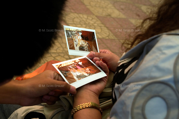 Visitors share polaroid pictures taken of themselves with a captive tiger in the Tianjin Zoo in Tianjin, China.