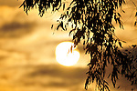 Sunset at the beach through tree branches