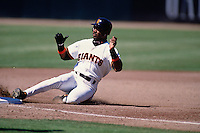 SAN FRANCISCO, CA - Barry Bonds of the San Francisco Giants slides into third base during a game at Candlestick Park in San Francisco, California in 1995. Photo by Brad Mangin