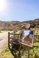 Laurel Canyon Wilderness Park in Laguna Beach