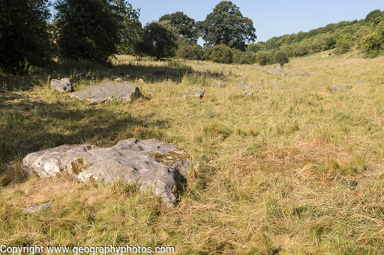 Sarsen stones lying in a boulder stream at Lockeridge Dene, near Marlborough, Wiltshire, England, UK