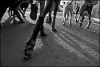 LA MANADA<br /> Por Rafael Su&aacute;rez.<br /> Quer&eacute;taro, Qro. a 4 de Diciembre del 2012.- Joaqu&iacute;n empieza a caminar antes de las siete de la ma&ntilde;ana; para ese tiempo, a su lado lo acompa&ntilde;an tres perros. Todos son suyos. Joaqu&iacute;n es el l&iacute;der de la manda, qu&eacute;, conforme avance el d&iacute;a ira creciendo hasta llegar a sumar quince perros. No importa el tama&ntilde;o, el color, o la raza. Les esperan por delante varios kil&oacute;metros a lo largo de un caminata de al menos cuatro horas. &nbsp;<br /> <br /> Las caminatas tienen el objetivo de proporcionar un espacio y tiempo para la convivencia y la socializaci&oacute;n lo cual se traduce en la mejora del comportamiento canino. El perro es educado y el comportamiento en casa mejora.<br /> <br /> Educaci&oacute;n implica ordenamiento; y poner orden siempre es un trabajo demandante. Joaqu&iacute;n comienza con poner orden en su propia persona, en empezar el d&iacute;a balanceado y con una buena energ&iacute;a, todos los d&iacute;as hay que dar salida y escape a la emociones para poder hacer este trabajo. Todos los d&iacute;as hay que ganarse un lugar en la manada.<br /> El comportamiento canino se basa en su herencia gen&eacute;tica que lo prepara para una vida en manada.&nbsp; Uno de los errores m&aacute;s comunes de los due&ntilde;os de perros es juzgar seg&uacute;n est&aacute;ndares humanos y no caninos. En la manda es necesario demostrar el rango y la autoridad. La manda es un espacio con orden jer&aacute;rquico bien establecido. &nbsp;El sometimiento, libre de sufrimiento para el perro, es necesario para este orden.<br /> <br /> En la manada hay un jefe &ndash;el macho m&aacute;s fuerte, el m&aacute;s dotado o la hembra m&aacute;s adulta- un grupo intermedio y por &uacute;ltimo un grupo inferior &ndash;los cachorros o los m&aacute;s d&eacute;biles- &nbsp;Mientras se respete este orden no surgir&aacute;n conflictos, aunque en ocasiones,&nbsp; habr&aacute; enfrentamient