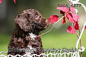 Bob, ANIMALS, REALISTISCHE TIERE, ANIMALES REALISTICOS, dogs, photos+++++,GBLA4277,#a#, EVERYDAY