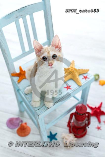 Xavier, ANIMALS, REALISTISCHE TIERE, ANIMALES REALISTICOS, cats, photos+++++,SPCHCATS853,#a#