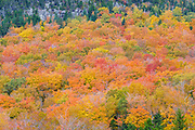 Bald Mountain in Franconia Notch State Park of New Hampshire USA during the autumn months