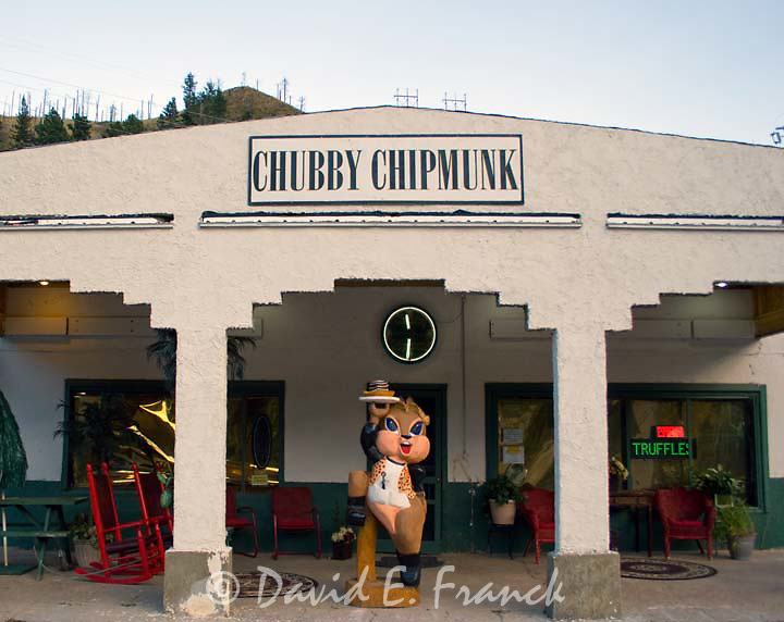 Chubby chipmunk deadwood sd