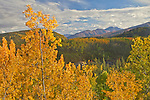 Fall colors frame an unnamed mountain in Denali National Park and Preserve, Alaska, USA