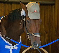 May 1, 2014: Wicked Strong, trained by Jimmy Jerkens, tries out a Centennial Farm baseball caps during some downtime before morning workouts for the Kentucky Derby at Churchill Downs in Louisville, KY. Jon Durr/ESW/CSM
