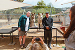 LAKE HUGHES - MAY 21: Paul and Colette Pondella have 10 wolfdogs in their pack at the Shadowland Foundation. Visitors John Westbrook (left) and Tim Deutscher pose for a photo with the animals. (Photo by Kendrick Brinson)