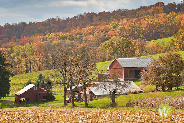 Farm and barn in autumn.