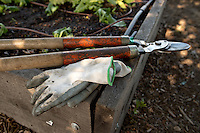 Gardening gloves and pruning shears sit on the corner of a plant bed at the Social Advocates for Youth Sunflower Community Garden in Santa Rosa, Calif., on May 14, 2013. (Photo by Alvin Jornada)
