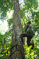 Basket for the honey slung over his shoulder, a honey-hunter nimbly climbs a tree with the help of the lianas. The honey-hunters go into the forest for the honey harvest with an axe and machete as tools. Basket, rope, ladder, everything is made in minutes by the team using lianas, fibers, sticks. I also watched a climb for which they built out of lianas a bridge between the branches of two trees to reach an enormous mahogany tree.///Panier pour le miel en bandoulière, un chasseur monte prestement à un arbre à l'aide de lianes. Les chasseurs partent en forêt pour la récolte du miel avec pour outils une hache, une machette. Panier, corde, échelle, tout est fabriqué en quelques minutes par l 'équipe à l'aide de lianes, fibres, bâton. J'ai aussi assisté à une montée ou ils ont fabriqué avec des lianes un pont entre les branches de deux arbres pour accéder à un énorme acajou.