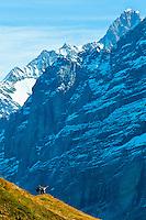 Hiking in the Swiss Alps from Mannlichen to Kleine Scheidegg, Canton Bern, Switzerland