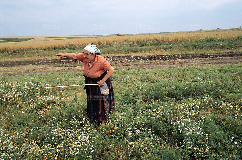 Kosovo. Village of Gaglavica. An old serb woman, a farmer, stands up in the fields. She holds a wood stick in her left hand and points out a direction with her right arm and finger. Kosovo (Albanian: Kosova) is a province of Serbia. While Serbia's sovereignty is recognised by the international community, in practice Serbian governance in the Kosovo province is virtually non-existent.  © 1995 Didier Ruef