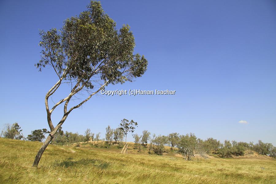 Israel, Northern Negev, Tel Haror, site of ancient Gerar