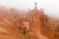 Bryce Canyon National Park, UT: Fog blankets the hoodoos and rock forms of the  Bryce Ampitheater