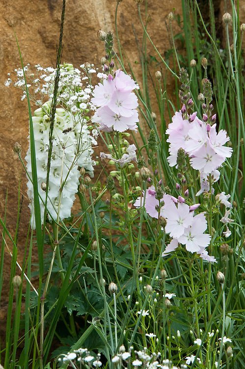 Pink Sidalcea malviflora 'Elsie Heugh', white Delphinium, and Gypsophila cerastioides, Mont Blanc by Percy Bysshe Shelley, English Poet Garden, Hampton Court Flower Show 2011.