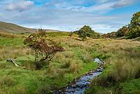Stream at Nob Barn near Chipping, Preston, Lancashire.