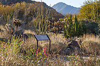 Desert landscape with signage at Living Desert Zoo and Gardens, Palm Springs, California.