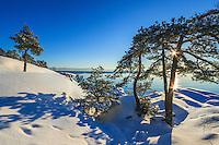 Vinter med snö sol och tallar på Gålö i Stockholms skärgård