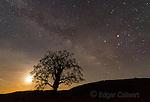 Milky Way, Coast Live Oak, Quercus agrifolia, Los Padres National Forest, Big Sur, Monterey Co.psd