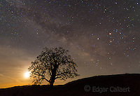 Milky Way, Coast Live Oak, Quercus agrifolia, Los Padres National Forest, Big Sur, Monterey Co.psd