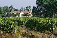Europe/France/Aquitaine/24/Dordogne/Vallée de la Dordogne/Route des Vins de Bergerac/Thenac: Le vignoble