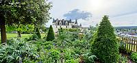 France, Indre-et-Loire (37), Amboise, château d'Amboise, massif de lauriers du Portugal taillés en topiaire, géranium, cardons