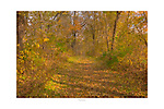 Fallen leaves carpet a nature trail in Scott County Park, southest Iowa. Limited Edition Signed and Numbered Print on Premium Archival Bamboo Paper, Signed and Numbered, limited to 20.