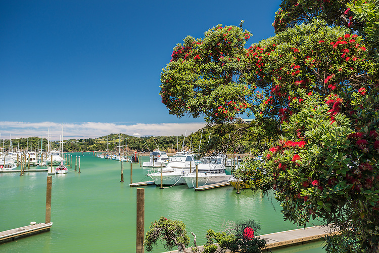 Summer's day with Pohutukawa tree and boats in a marina, Tutukaka Coast, Northland, New Zealand - stock photo, canvas, fine art print