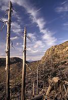 AJ3694, Mount Saint Helens, volcano, Mount St. Helens National Volcanic Monument, Cascades, Cascade Range, Washington, View of the barren volcanic landscape after the 1980 eruption at Mount St. Helens National Volcanic Monument in the state of Washington.
