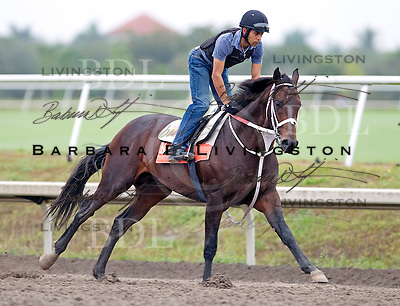 Palm Meadows Training Center 2-8-12