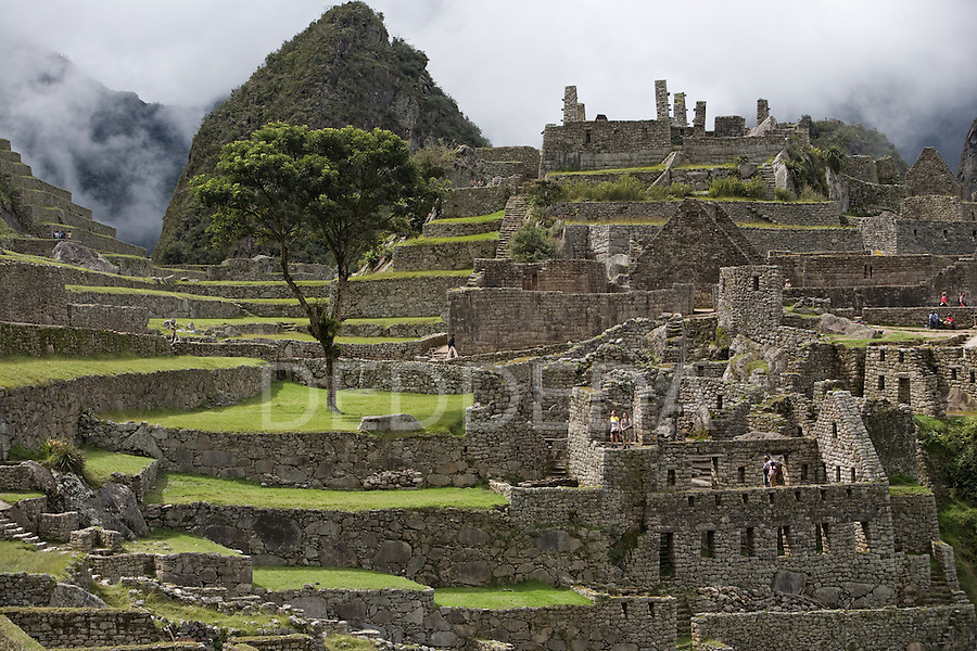 """The """"Tree of Life"""" grows in the ancient ruins of Machu Picchu, the end of the Inca Trail, in Peru."""
