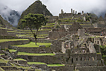 "The ""Tree of Life"" grows in the ancient ruins of Machu Picchu, the end of the Inca Trail, in Peru."