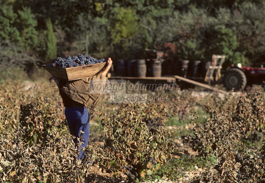 Europe/France/Midi-Pyrénées/46/Lot/Env. d'Esclauzels : Vignoble de Cahors - Porteur de hotte à vendange<br /> PHOTO D'ARCHIVES // ARCHIVAL IMAGES<br /> FRANCE 1980