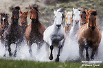 A photo of a herd of ranch horses running through water.