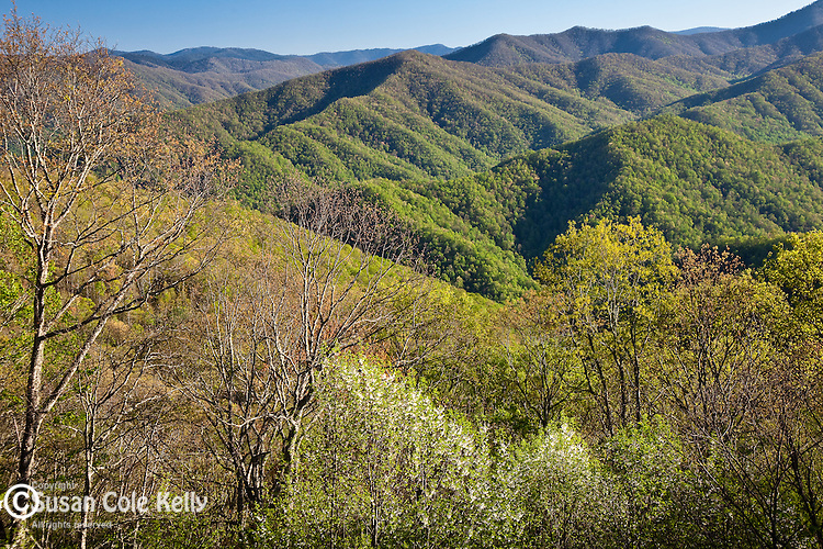 Springtime view from Big Witch, Blue Ridge Parkway, NC, USA