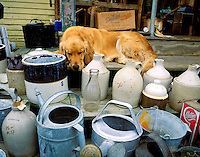 Sleeping dog at a flea market, Mt Desert Island, Maine