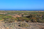 Salt marsh coastal ecosystem Solana Matoral, Morro Jable, Jandia peninsula, Fuerteventura, Canary Islands, Spain